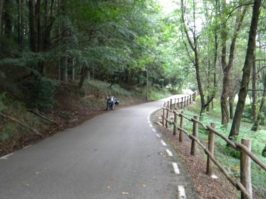 60 Curvas da floresta 2